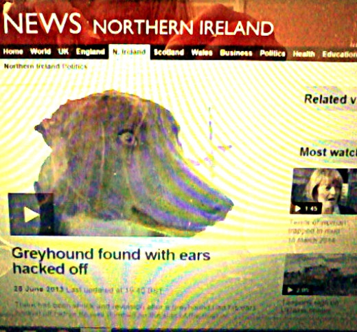 The horrific case of a greyhound found with his ears hacked off and heartlessly dumped, as reported by the BBC in June 2013.