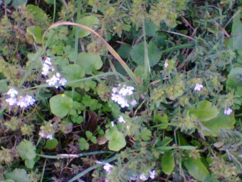 Wild plants I noticed on my daily walk.