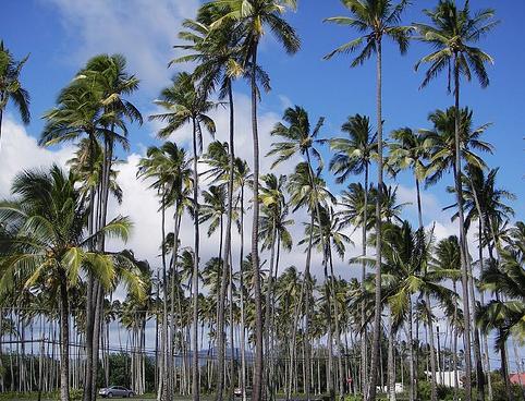 Royal Coconut Grove