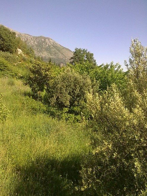 The green garden view during the  warm season