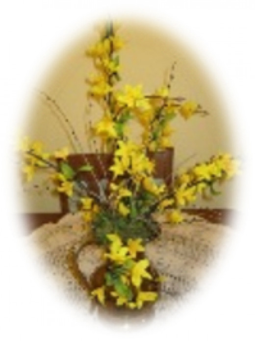 Delicate forsythia blooms in early spring and makes a long lasting fresh bouquet.
