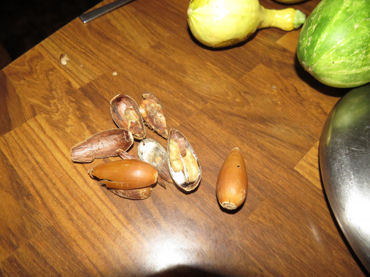 Spoiled acorns