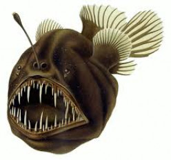 The Male Humpback Anglerfish is Absorbed in his Mate!