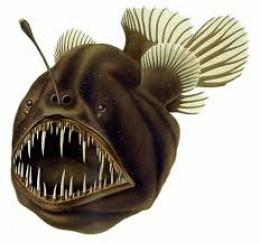 Female Humpback Anglerfish.