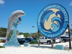 Swim, play and learn with dolphins at DRC