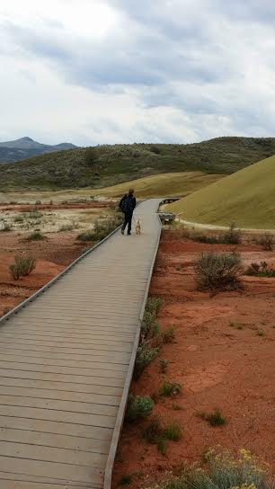 Dogs are permitted on-leash at the Painted Hills section of the John Day Fossil Beds National Monument in Oregon