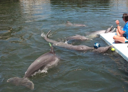 "The dolphins don't ""have to"" participate in these sessions - but they all seem to want to!"