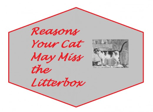 Top reasons your cat may be missing the litterbox and ways to help.