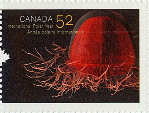 Fun fact:  Crossota norvegica appeared on a Canadian Stamp, but they misspelled it.