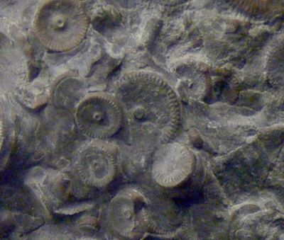 These machine parts were found in Russia, allegedly fused in granite and dated to 400 million years old. This type of find is far from alone.