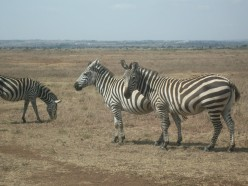 Nairobi's National Park, Giraffe Sanctuary and Hippo Bay Resort