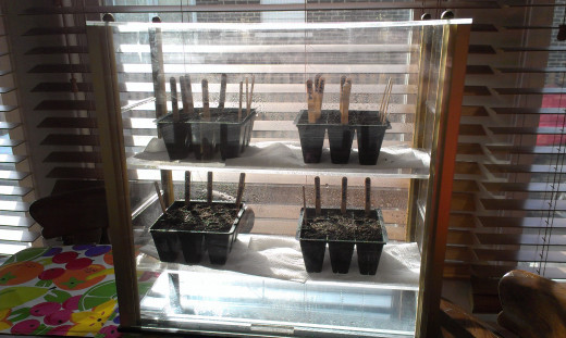 Makeshift greenhouse made out of an old jewelry display case a friend freecycled to me!