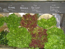 Many different types of Lettuces that are arranged in order for sale at local Farmer Market.  Local Farmer Markets are a great place to fine fresh home grown Lettuce grown locally from a vegetable farmer that enjoys growing many vegetables on his far