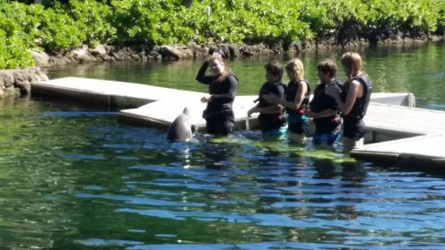 Play with the dolphins at Dolphin Quest on Oahu, Hawaii