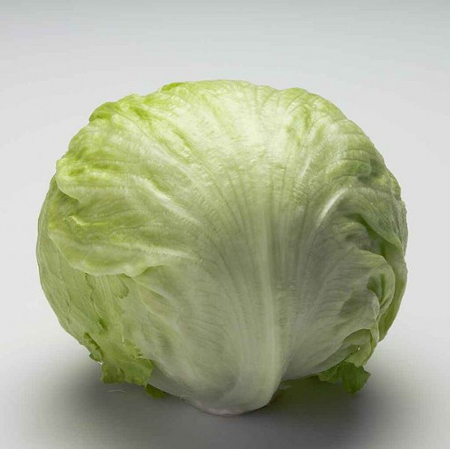 A full head of a great looking Head of Lettuce. This is a great example of a mature head of lettuce which can be cut up for in salads or for to be put in sandwiches.