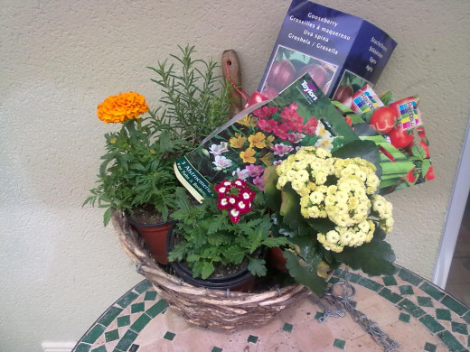 A gardening starter kit for a friend. This time in a hanging basket for growing cherry tomatoes. Cherry tomatoes love hanging basking toamtoes.