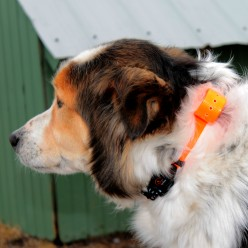 How to Choose an Anti-Bark Collar for Your Dog