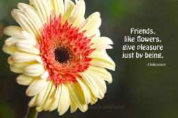 friends are like flowers