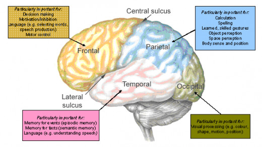 Fig 2.  Frontal lobe and motivation association