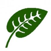 amberlex profile image