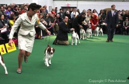 From the 2013 Westminster Kennel Club Dog Show