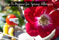 How To Prepare For Spring Time Allergies