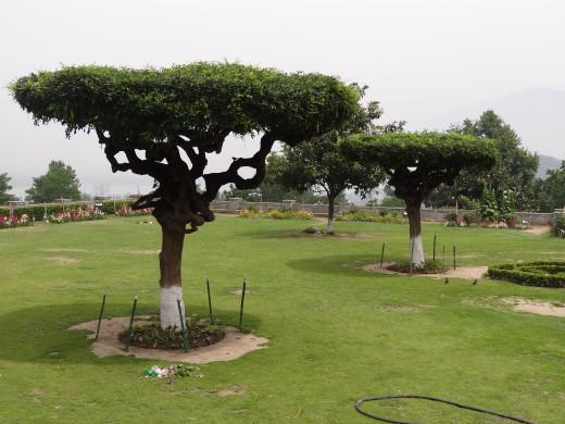garden in srinagar