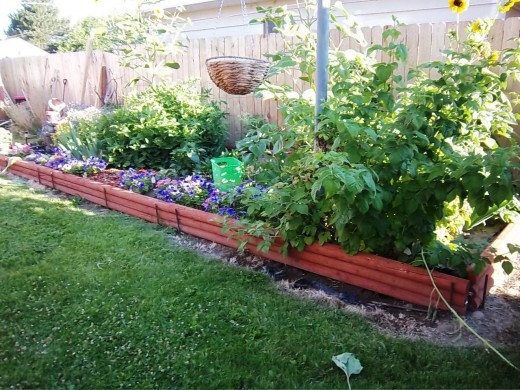 This raised garden bed was lush and green last summer.