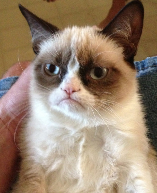Tard The Famous Grumpy Cat