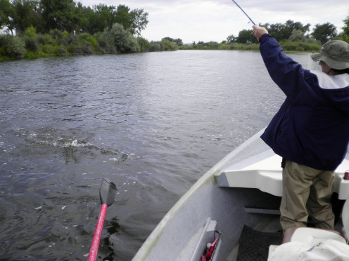 Fly fishing from the boat.