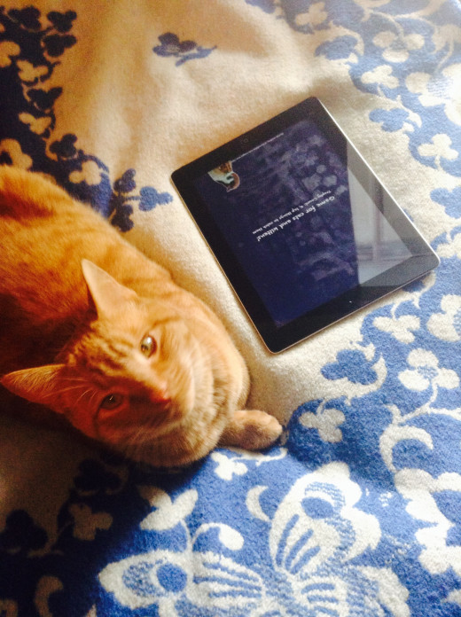 Game for cats provides hands-free entertainment for your cat while you are away