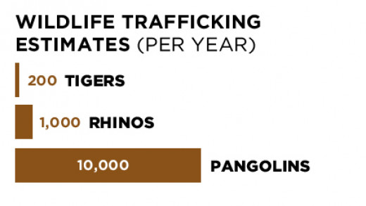 Rhino numbers for South Africa only.