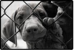 Animal kill shelters are just as guilty of abusing animals as the owners they took them from