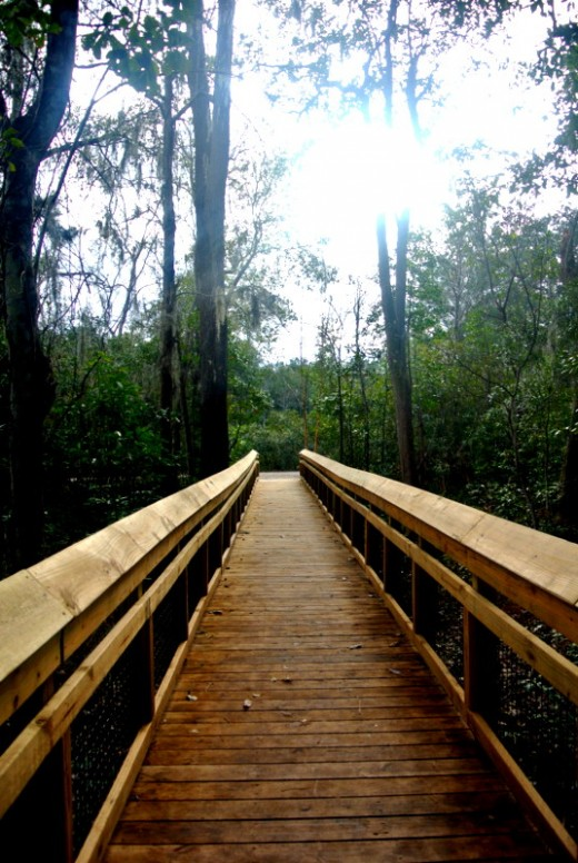 Jacksonville Arboretum and Gardens offers many nature trails, creeks and free programs to learn more about nature and animal.  They also offer volunteer opportunities to help maintain the park.