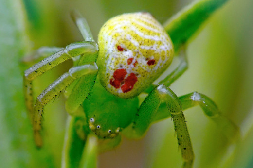 Where did this scary-a&$ clown spider come from? And how exactly does it sling webs?