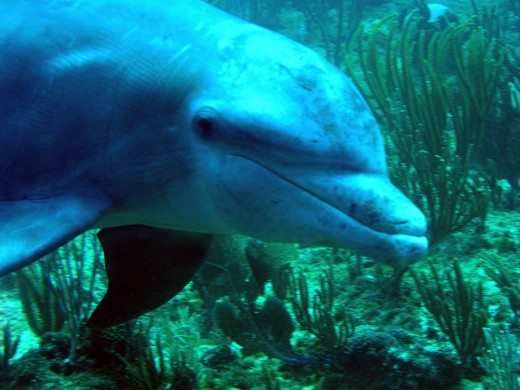 Dolphins, like bats, use echolocation to navigate.