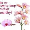 7 Detailed Tips on How to Keep Orchids Beautiful and Healthy