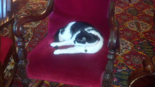 Simon, the most famous resident currently at the Red Lion Inn