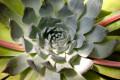 Arizona's Boyce-Thompson Arboretum:  A Desert Plant Paradise
