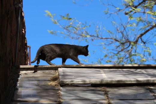 Cat on a hot slate roof, an Arizona tale.