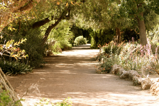 Although in a desert, many of the trails offer ample shade.