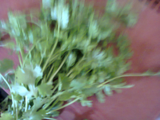 green coriander leaves for topping