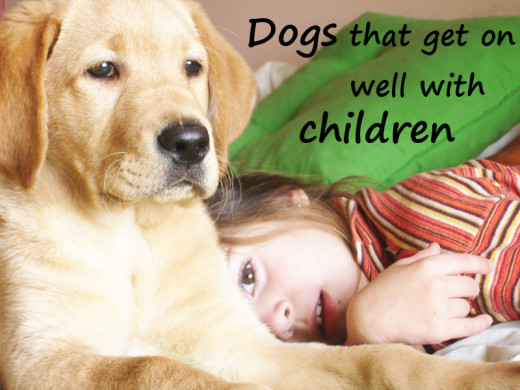 Young children with dog? Is this a good idea?