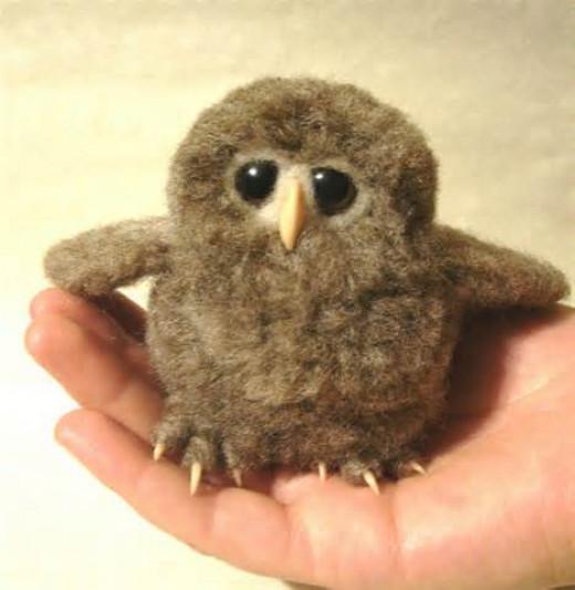 New born owl