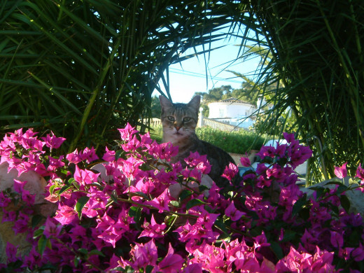 My cat Ziggie - loves flowers but she was already called Ziggie when she came to live us.