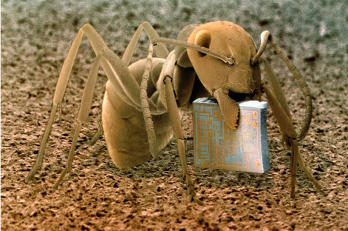 Ant reading a book.