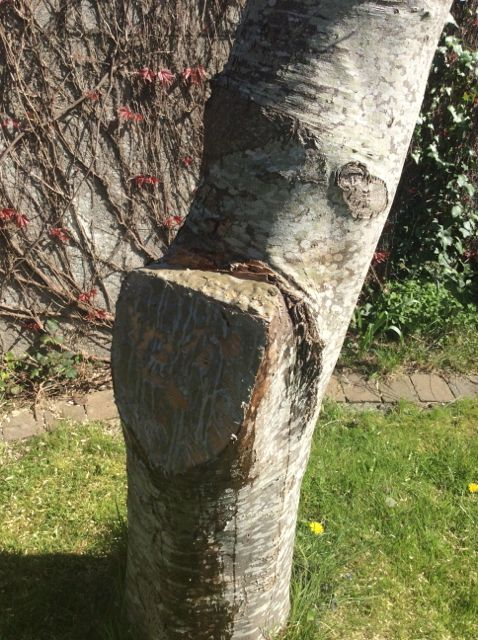 Cut branch treated with gungy stuff – this is very gluey and difficult to get off your hands so wear gloves that you're prepared to throw out afterwards.
