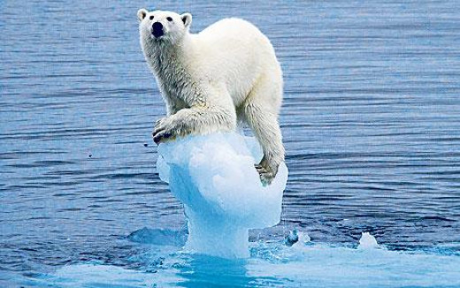 Effect of climatic change on animals