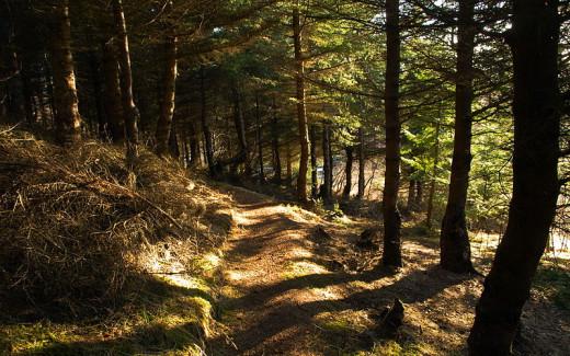 Axel Kristinsson from Reykjavík, Iceland, Forest Path