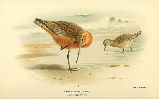 Coloured Illustrations of Birds {Lord Lilford}